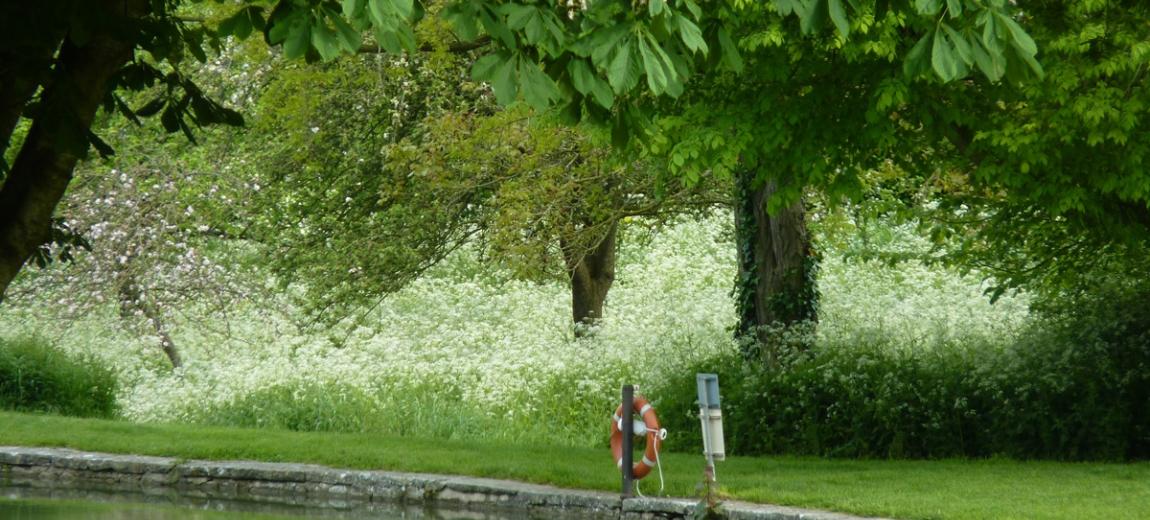 Carp pond at Glastonbury Abbey