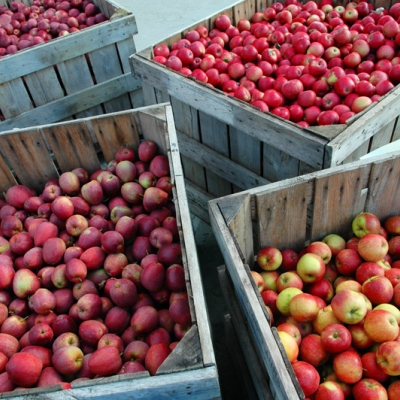 Apple Day at Chalice Well