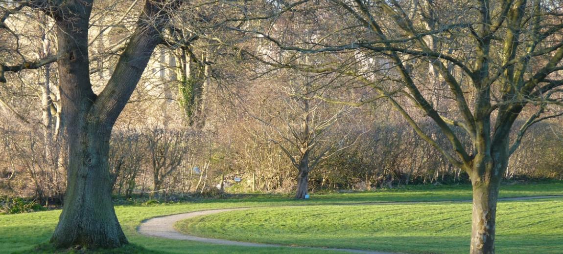 Trees at Glastonbury Abbey