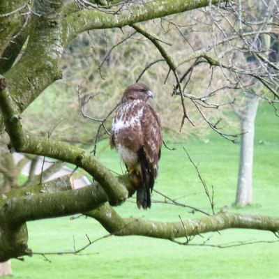 Wildlife in the Abbey grounds